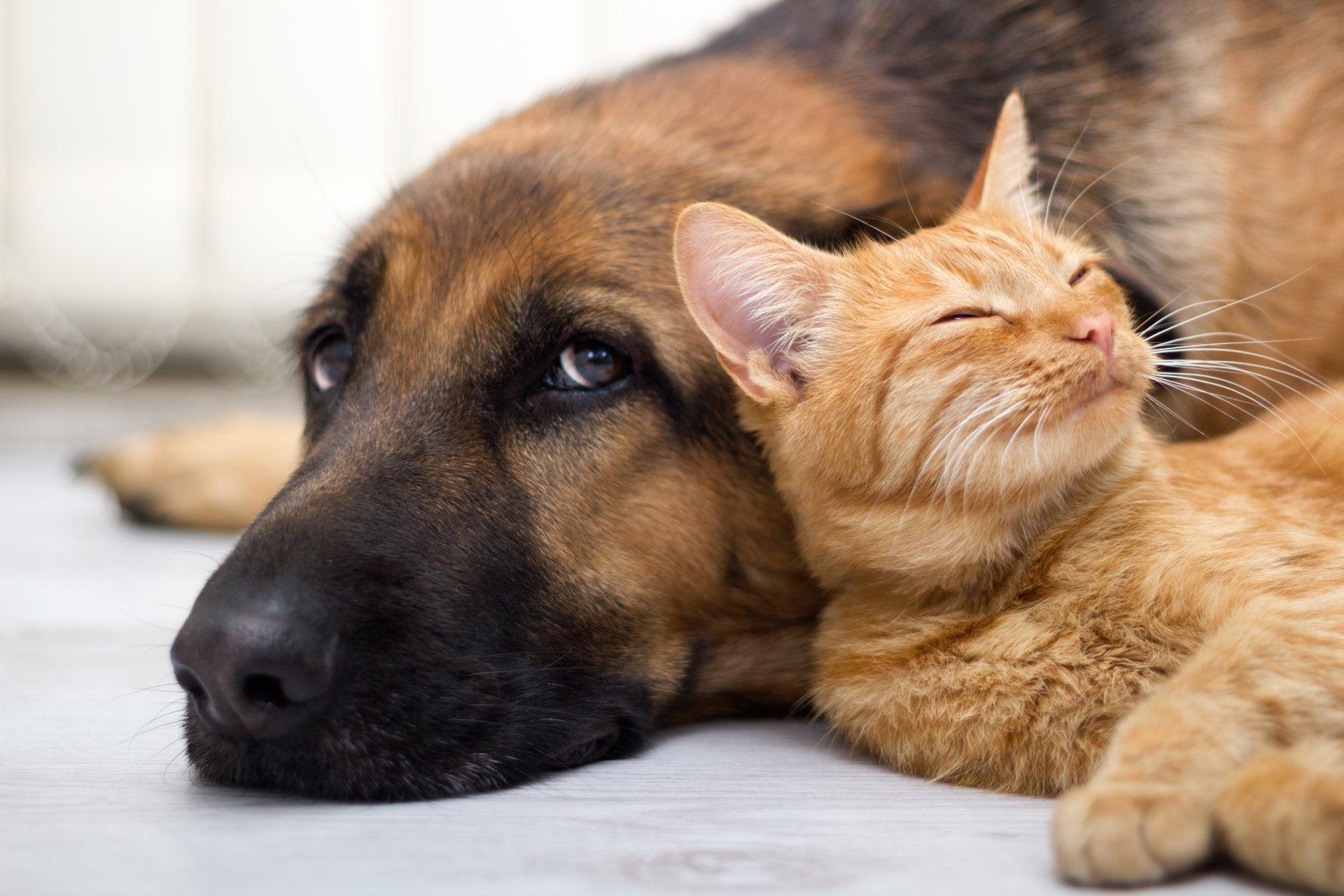 После обработки собаки, кошку нужно временно изолировать