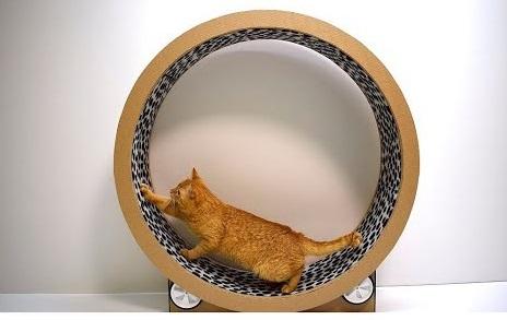 Картонное колесо может быть недолговечным