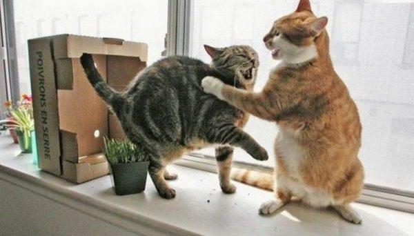 Даже вовремя безобидных игр животные могут нанести друг другу увечья