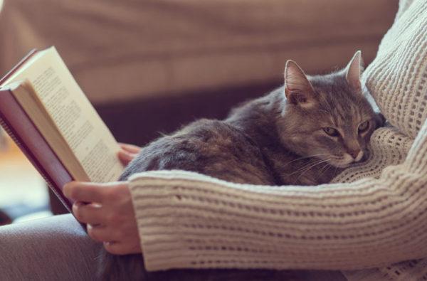 Определяясь с бюджетом на лекарственные средства для кота, кошки или любимца другого семейства, помните, что вы несете за него ответственность, и что кроме вас у него никого нет.