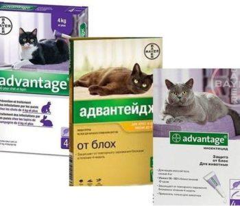 В среднем цена на одну дозу варьируется от 150 до 250 рублей