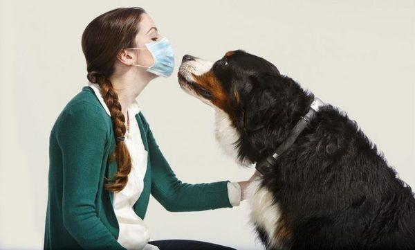 При встрече с собакой воспользуйтесь медицинской маской