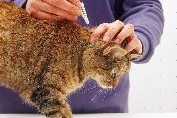 Животное нужно регулярно обрабатывать от клещей, блох и гельминтов