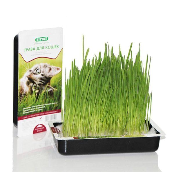 Очень полезно будет также купить или посадить кошке дома специальную траву, чтобы она могла ее пожевать, и почистить желудок