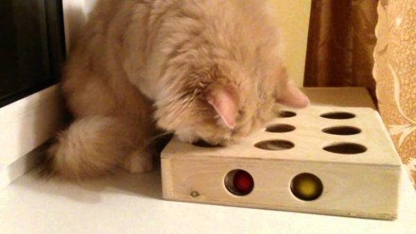 Чтобы скрасить одиночество питомцу, можете бросить на балкон также пару игрушек кота