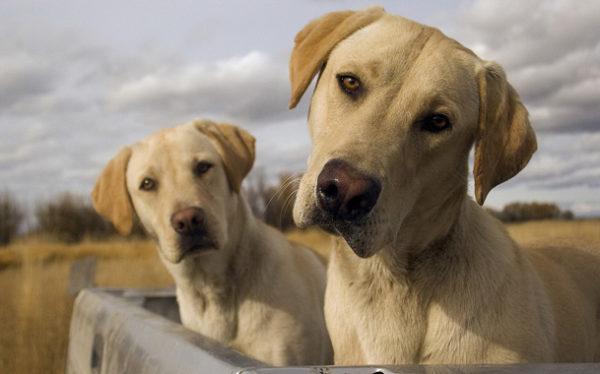 Собачье имя должно звучать звонко