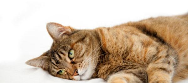 Чтобы избавить себя от боли, кошка может весь день не менять положения, и даже кусать вас, чтобы вы не приближались