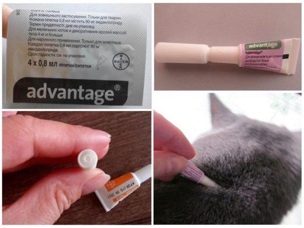Как нанести средство на кошку