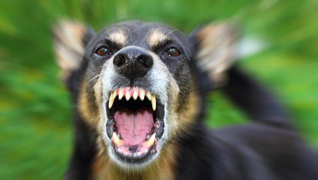 Агрессия у собак нередко является генетическим пороком