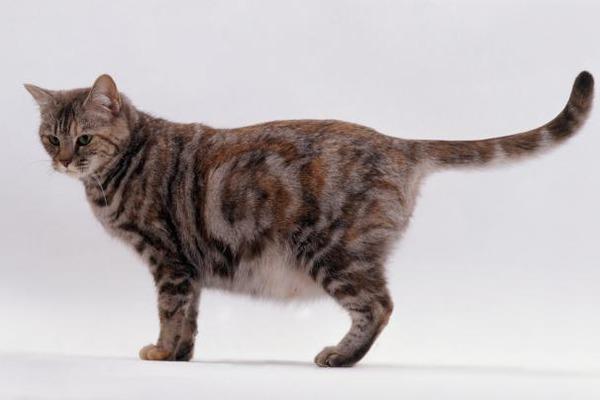 Активированный уголь безопасен для беременных кошек