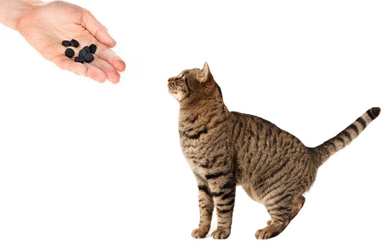 Активированный уголь для котов