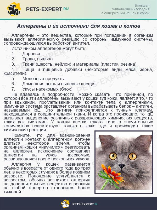 Аллергены и их источники для кошек и котов