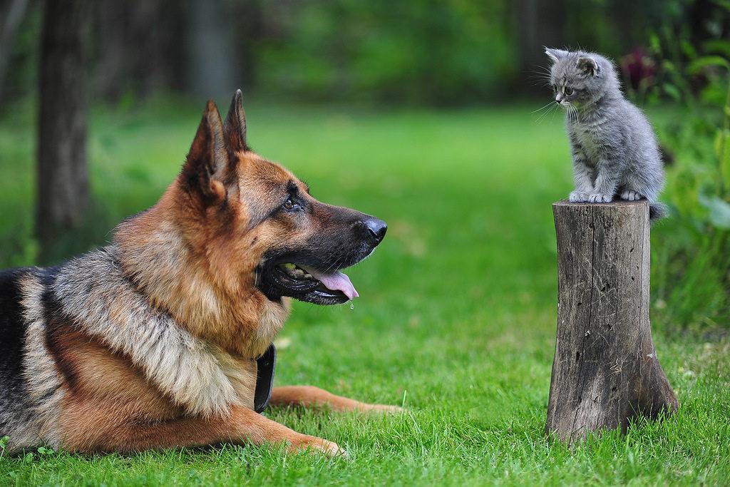 Анализ мочи у кошек и собак