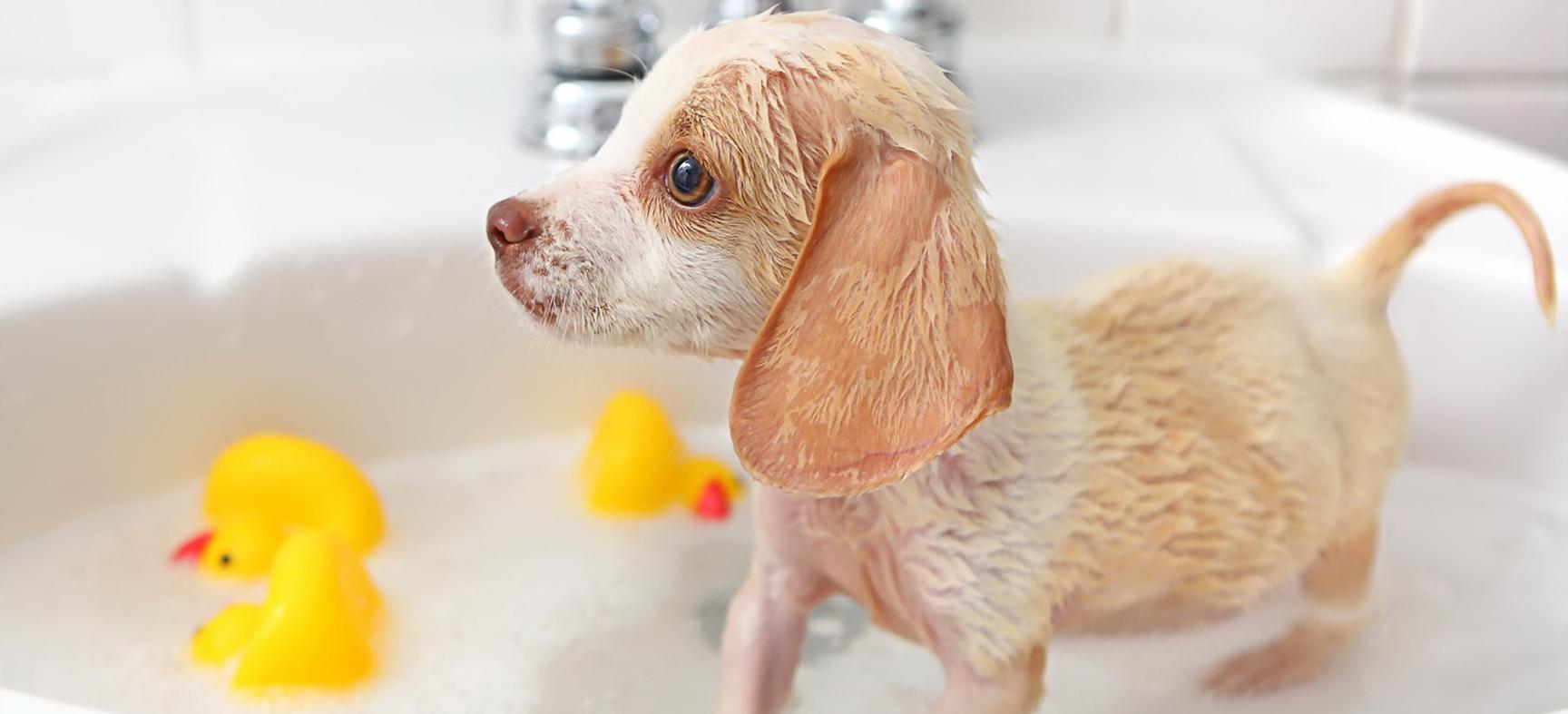 Антибактериальный шампуни не только лечат кожу, но и снимают зуд