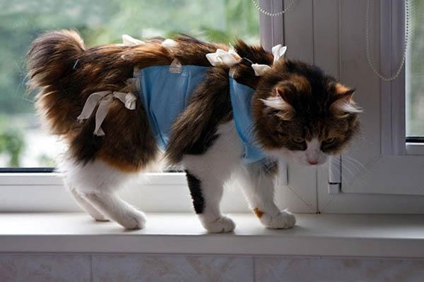 Антибиотики назначают кошкам при терапии обширных ран
