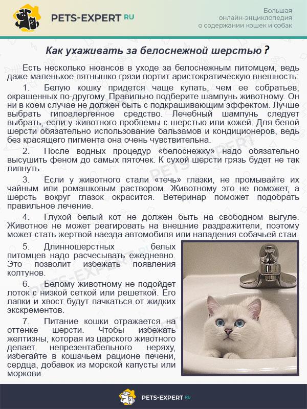 Если белая кошка с голубыми глазами порода