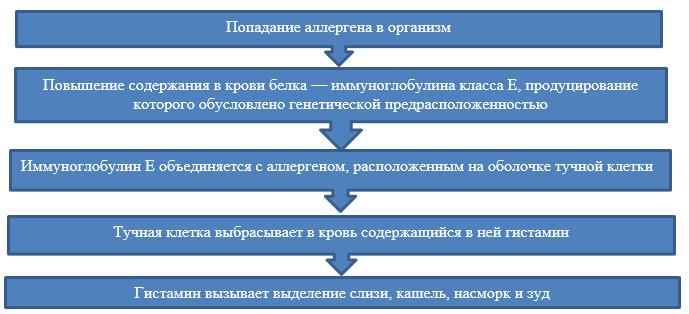 Механизм действия аллергической реакции