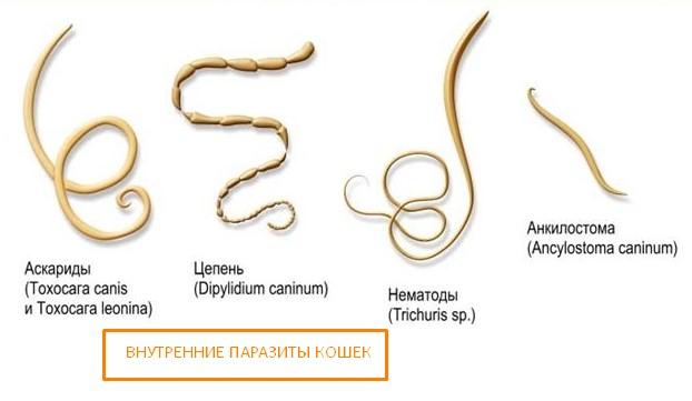Благодаря мягкому воздействию, гамавит быстро очищает организм животных от паразитов, не вызывая непереносимости