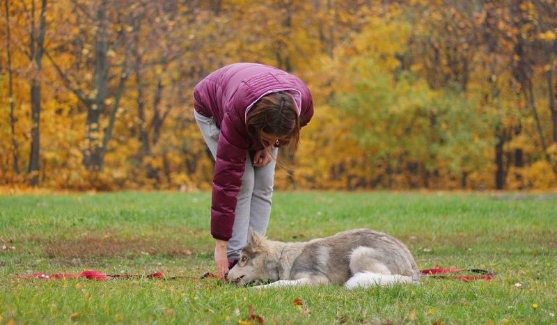 Блохнэт имеет ограничение по использованию с учетом возраста животного и его веса