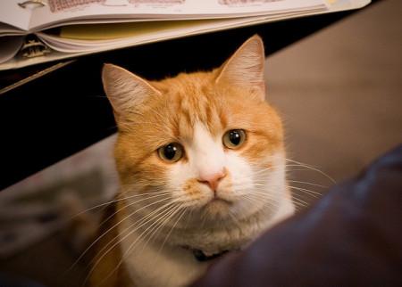 Болезни кошек: симптомы и лечение распространенных заболеваний кошек