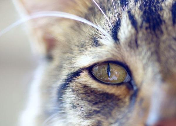 Большинство неприятностей кошкам доставляют инфекционные болезни, протекающие в тяжелой форме