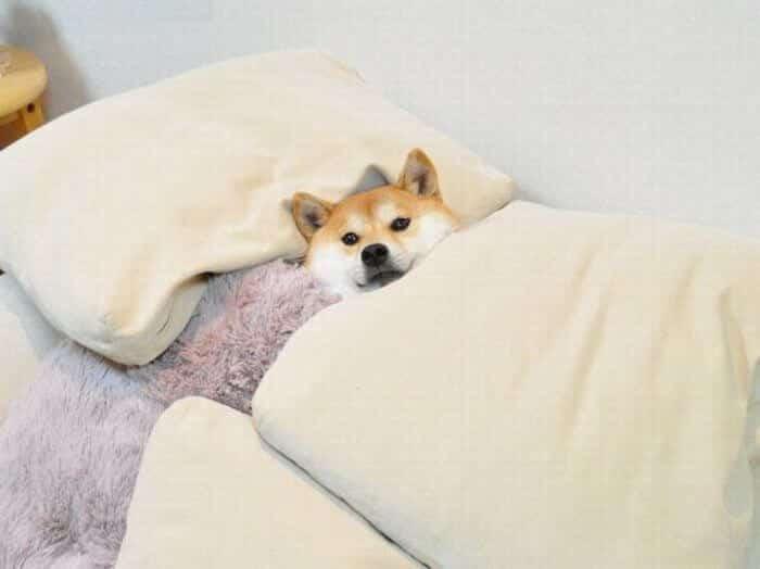 Большинство собак легче переносит именно натуральное лечение