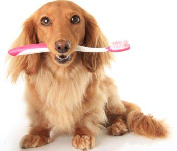 Болят ли зубы у собак