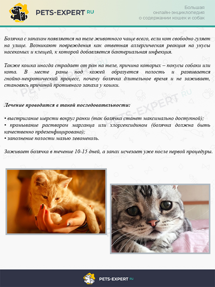 Болячка на теле у кошки