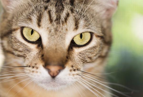 У кошки болячки на шее и чешутся: как лечить сухие болячки