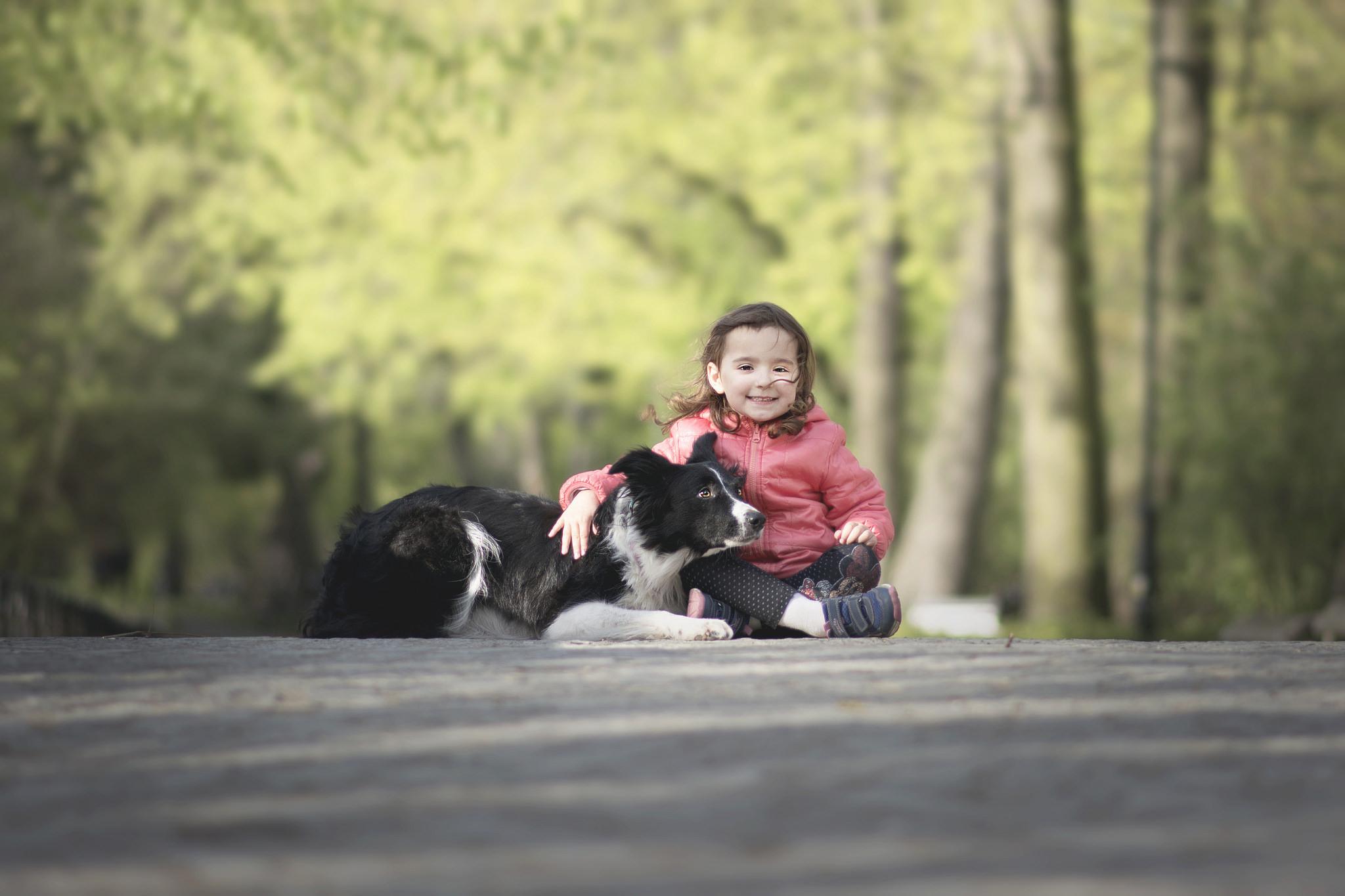 Бордер-колли - заботливый друг для детей