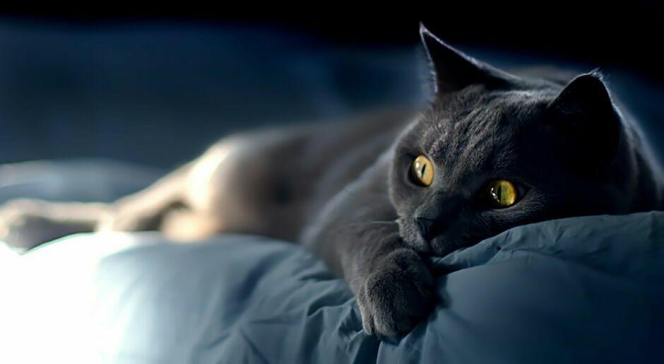 Борьбу за выживание коты продолжают вести и в заснеженной тайге и в отапливаемой комнате