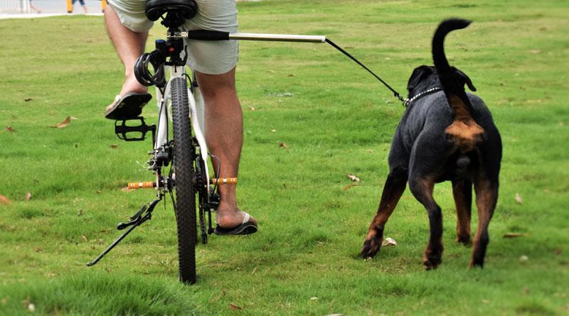 Пробежка с хозяином-велосипедистом