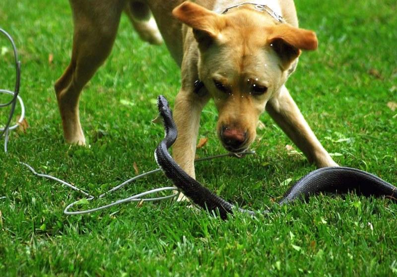Вещества, содержащиеся в яде змеи, могут спровоцировать конвульсии