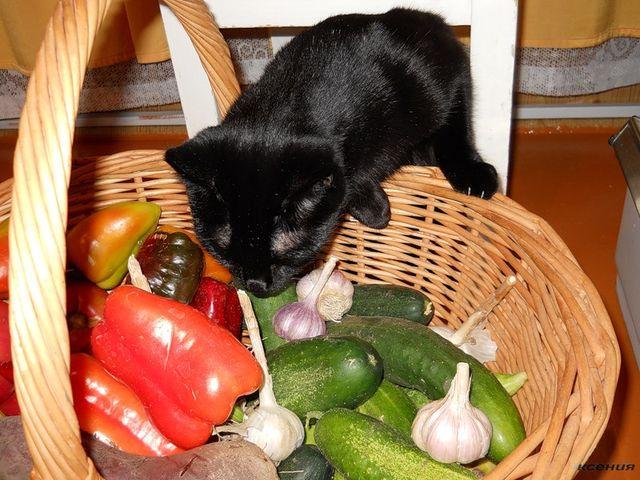 Включать в рацион питомца овощи - прекрасная идея, но воплощать ее нужно осторожно