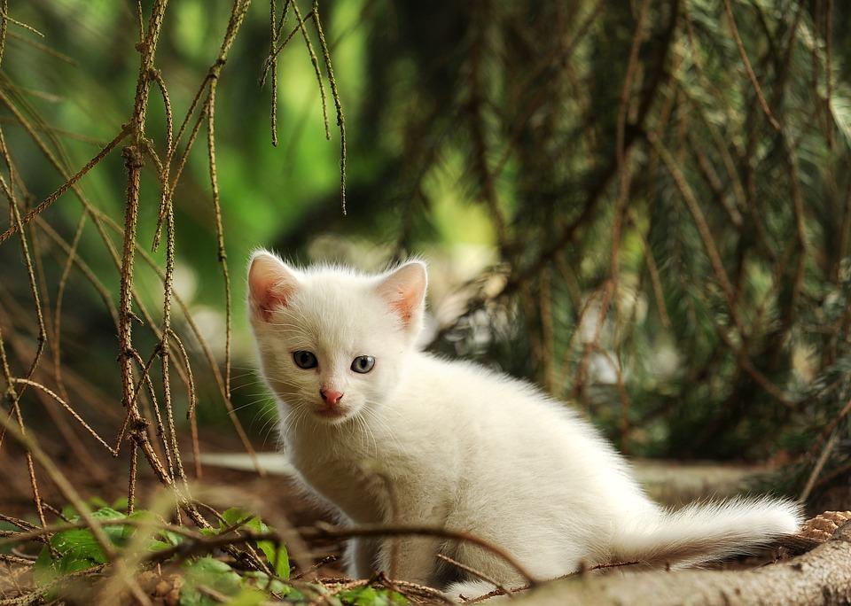 Внезапно обнаруженный белый котенок может стать для вас верным спутником
