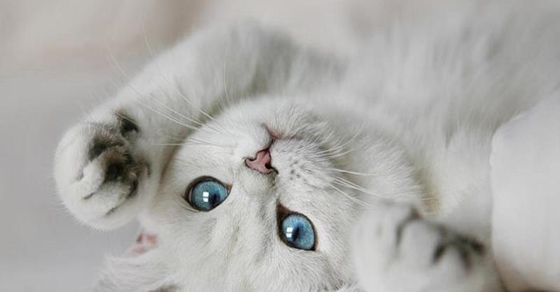 Вне зависимости, от того, какого цвета кот перед вами, помните - вы имеете дело с хищником
