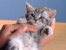 Возьмите котенка на руки