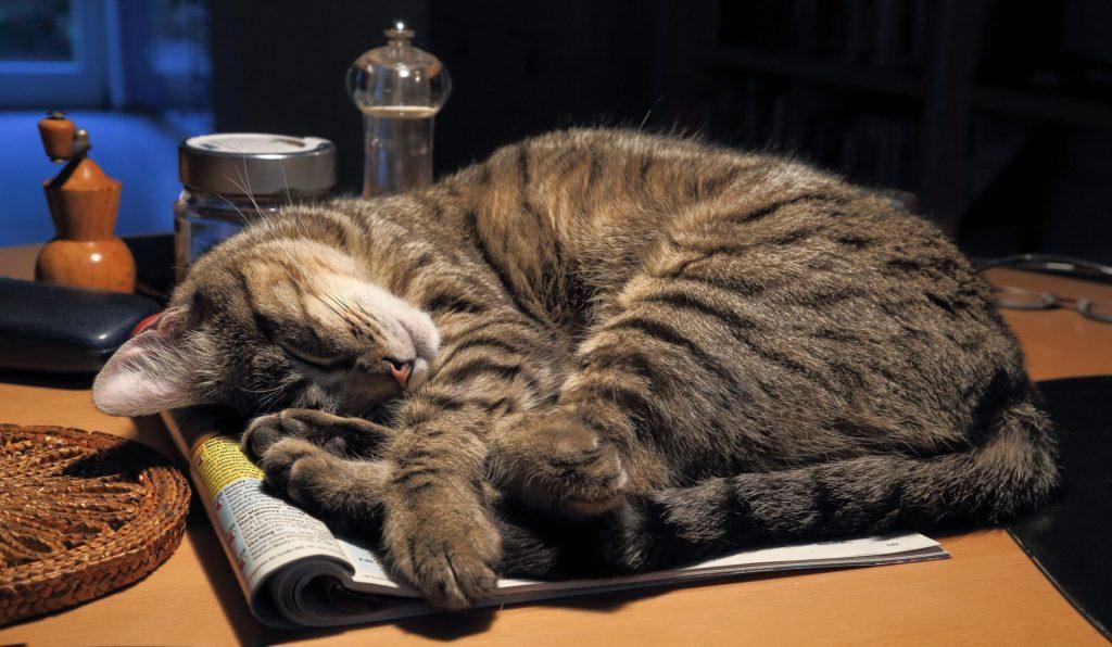 Вопреки устоявшемуся мнению, предметом кошачьего любопытства далеко не всегда выступает еда