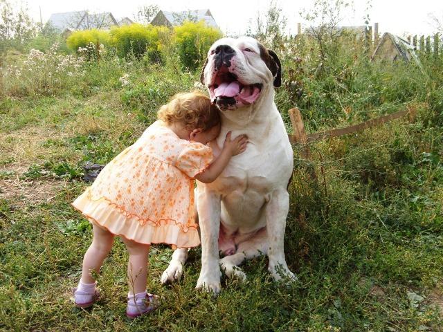 Воспитанный амбуль замечательно ладит с детьми