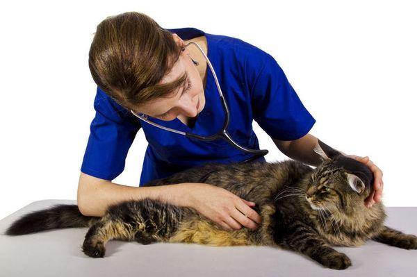 Восстановить здоровье кота при использовании Доксициклина можно в течение нескольких суток