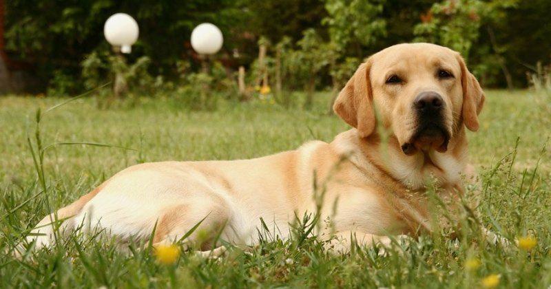 Во избежание неточностей в результатах анализа, точно следуйте инструкциям ветеринара и следите за гигиеной питомца