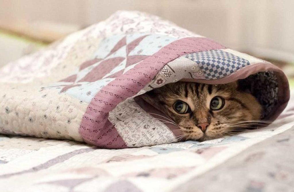 Во избежание падения температуры питомца после наркоза укутывайте его в одеяло