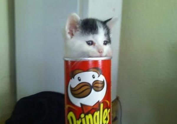 Вредная еда остается вредной как для человека, так и для котенка