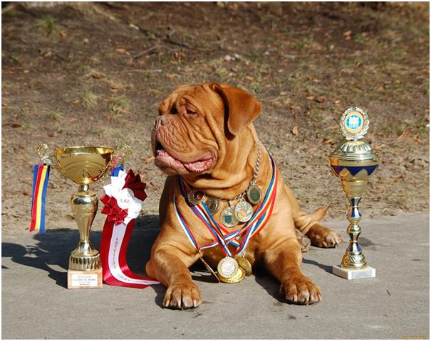 Все собаки, которые максимально подходят по всем критериям являются претендентами на звание чемпиона