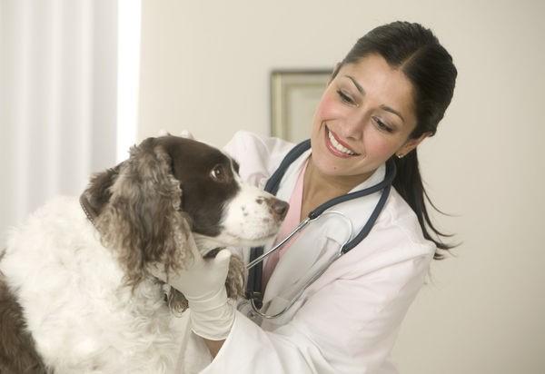 Все терапевтические назначения должен сделать ветеринар