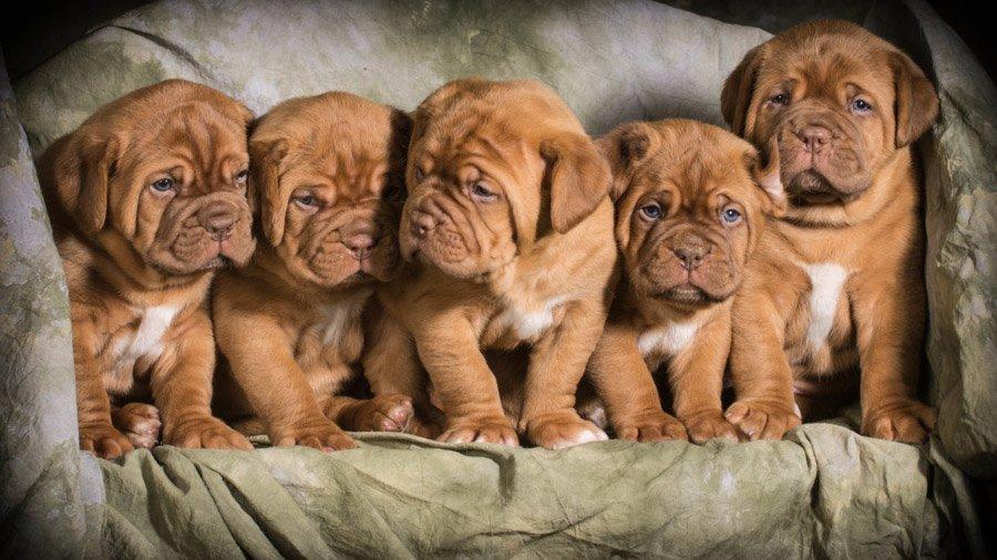 Выбирая щенка будьте внимательны и тщательно проверяйте все документы