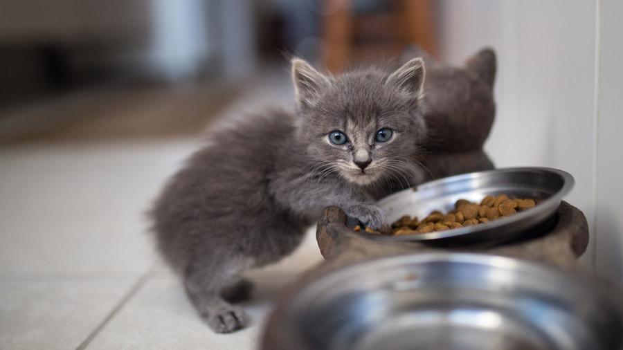 В наши дни каждый второй производитель кошачьих кормов делает и гипоаллергенную линейку