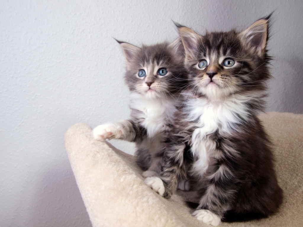 В развивающихся хрупких организмах котят могут произойти патологические изменения при неадекватной лекарственной терапии