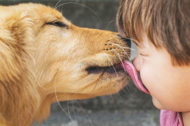 В слюне собак содержатся опасные бактерии и микробы