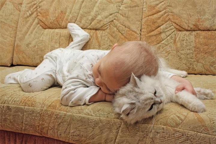 Даже самая искренняя любовь ребенка к коту способна попортить питомцу нервы